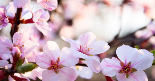 Smart-Catechismo: V elementare – un fiore per Maria
